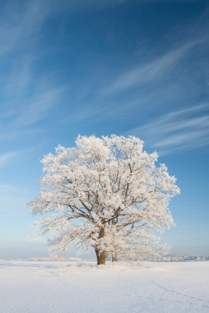 winterday: Snowy winterday