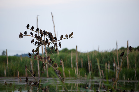 concourse: Starlings