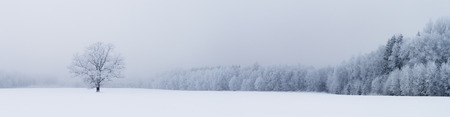 snow tree: Winter panorama