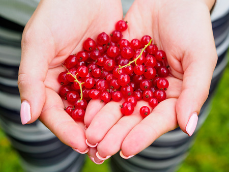Red currants in womans hand