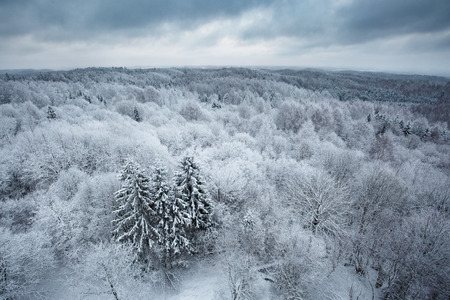 Aerial view to snowy winter forest Banque d'images