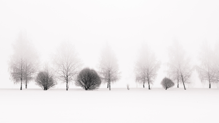 Tranquil black and white scene of birches in winter morning fog