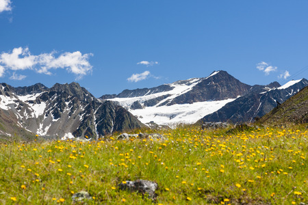 The Mittelbergferner in the Pitztal in Austria with a flower meadow in the foreground