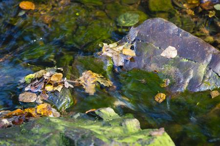 пышной листвой: Пышная листва в горной реке в болотах, высокие Арденны, Бельгия