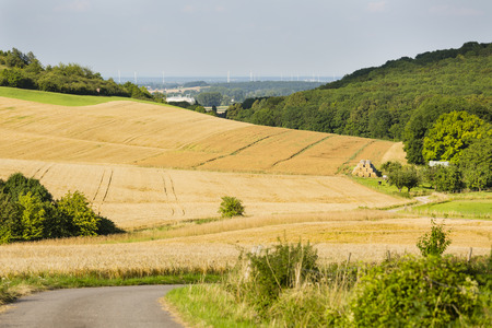 leading light: A road leading into golden rye fields in beautiful light on hills in northern Eifel landscape in Germany with some cows in the valley and wind turbines in the background. Stock Photo