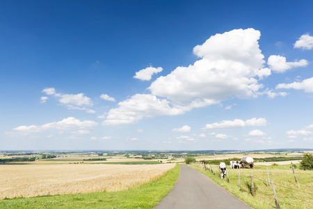 country landscape: A country road leading into beautiful landscape in the North Eifel in Germany, with some cows to the right.