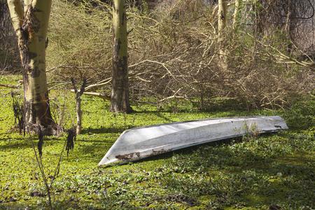 naivasha: A stranded boat in the green at the shore of Lake Naivasha, Kenya