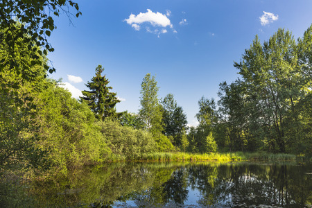 venn: A beautiful lake in swamp landscape surrounded by trees in the High Fens, Eifel, Belgium with blue sky.
