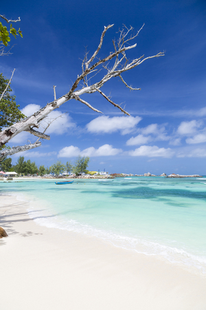 la digue: Perfect white beach in La Digue, Seychelles with a tree branch in the foreground Stock Photo