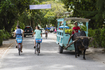 rented: LA DIGUE - AUGUST 13: Tourists and a traditional ox cart in the main street of La Digue, Seychelles on August 12, 2014