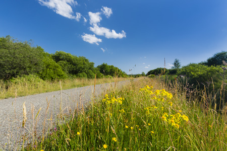 landscape flowers: Low angle view of a road leading through wide moor landscape with some yellow flowers in the foreground in the High Fens, Eifel, Belgium with blue sky.