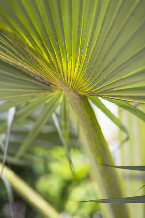 la digue: Palm leaf with a beautiful pattern in the hills of La Digue, Seychelles Stock Photo