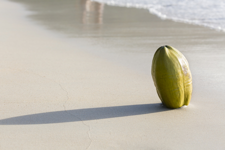 beau: A fresh green coconut on the beach at Beau Vallon in Mahe, Seychelles Stock Photo