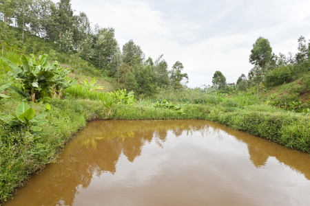 fish pond: An artificial fish pond in a valley in the green highlands north of Nairobi in Kenya.