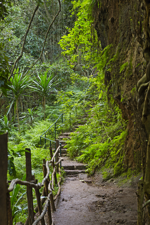 Trail through the jungle in a valley of Karura Forest in Nairobi, Kenya