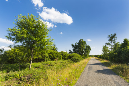 A road leading through wide moor landscape with some trees in the High Fens, Eifel, Belgium with blue sky.