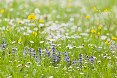 A meadow with lots of purple, yellow and white flowers, focus on foreground. Stock Photo