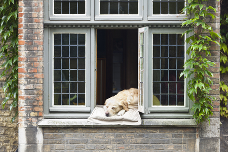 A dog relaxing on a pillow in a window at a canalside house in Bruges, Belgium.