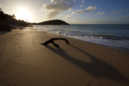 A piece of driftwood with long shadow on a caribbean beach in Antigua. Stock Photo