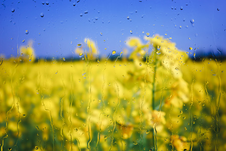 View through a window with raindrops to a sunlit rape seed field. Stock Photo