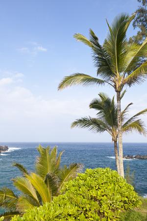 Tropical Garden Landscape in Maui, Hawaii.