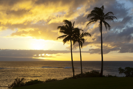 Palm trees along the rocky coastline at Napili Point at sunset in Maui, Hawaii.