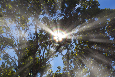 The sun shining through the trees while some clouds slide through the rain forest creating a rainbow effect due to light refraction. Taken at Pihea Trail in Kauai, Hawaii.