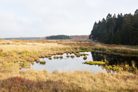 The Brackvenn in the High Fens (Hohes Venn, Hautes Fagnes) in eastern Belgium in autumn. The landscape includes swamp and moor areas in an altitude of 600 meters. Stock Photo