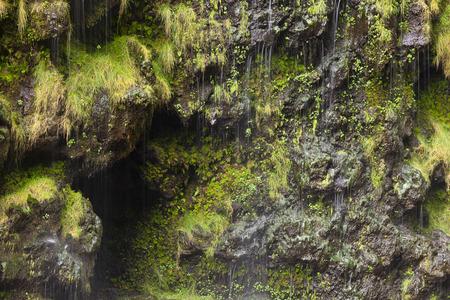 Waterdrops running down the steep walls at the Waimoku Falls in Maui, Hawaii. Stock Photo