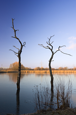 Some dead trees standing in partly frozen water.