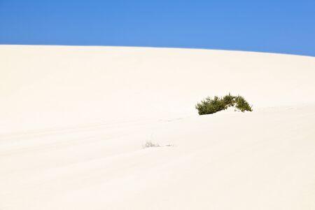 Bush in the sand dunes of Corralejo, Fuerteventura.