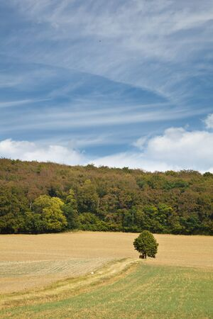 Fields, a forest and a single tree under blue sky with slight clouds. Stock Photo
