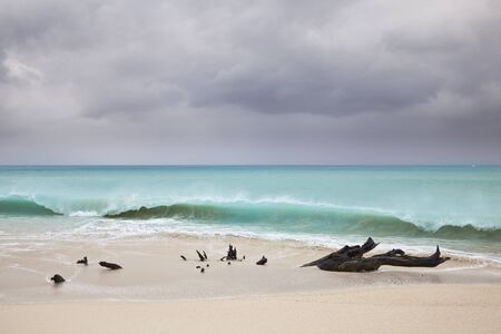 Stormy weather at Ffryes Beach in Antigua with driftwood in the sand. Stock Photo