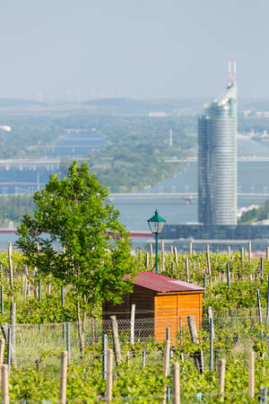 View from a vineyard hill over Vienna, Austria to the Danube river with the Millennium Tower to the right and a shed in the foreground.