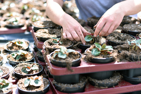 Gardener works in a greenhouse of a flower shop Archivio Fotografico - 102935475