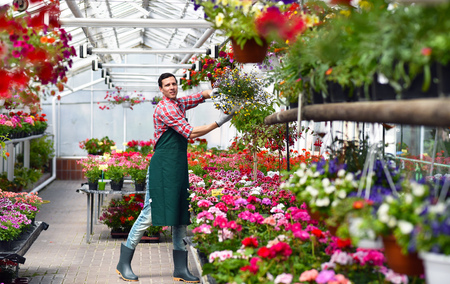 Gardener works in a greenhouse of a flower shop Archivio Fotografico - 102935476
