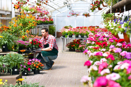 Gardener works in a greenhouse of a flower shop Reklamní fotografie - 103158070