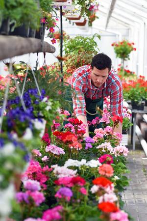Gardener works in a greenhouse of a flower shop Reklamní fotografie - 103158071