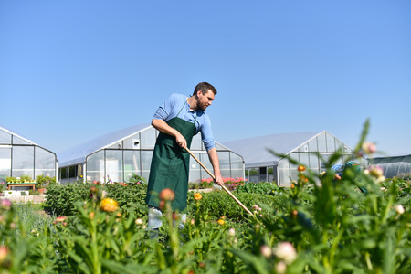 happy farmer growing and harvesting vegetables on the farm Reklamní fotografie - 106926106