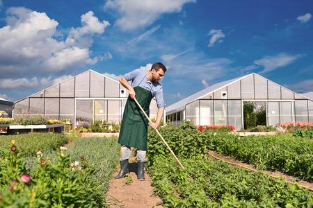 farmer in agriculture cultivating vegetables - greenhouses in the background Reklamní fotografie - 106926107