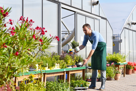 gardener works in a nursery - growing and selling plants and flowers Reklamní fotografie - 106926117