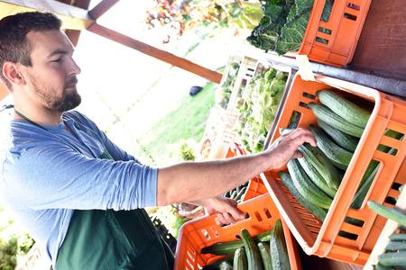 happy farmer growing and harvesting vegetables on the farm Reklamní fotografie - 106926123