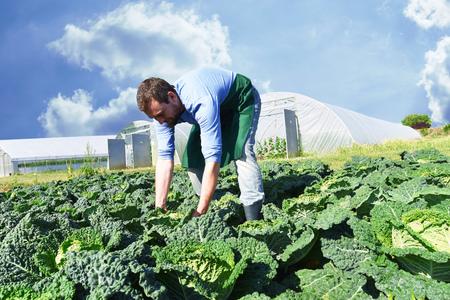 happy farmer growing and harvesting vegetables on the farm Reklamní fotografie - 106926124