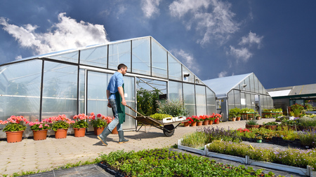 gardener works in a nursery - growing and selling plants and flowers Archivio Fotografico - 106926126