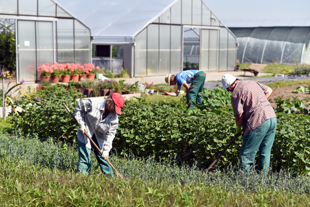 Workers growing plants on the field of a farm