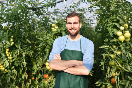 happy farmer growing tomatoes in a greenhouse Reklamní fotografie - 106926368