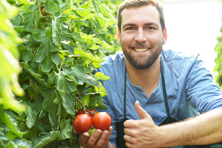 happy farmer growing tomatoes in a greenhouse Archivio Fotografico - 106926378