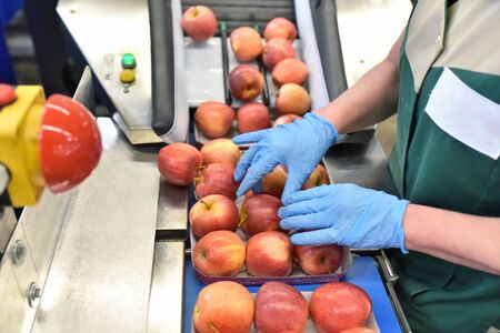 food factory: assembly line with apples and workers  Reklamní fotografie