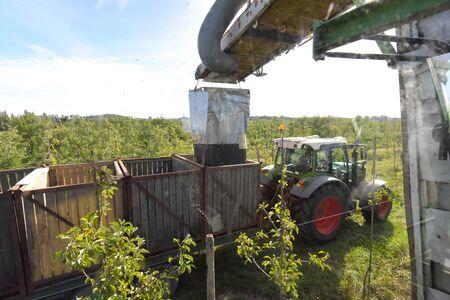 modern apple harvest with a harvesting machine on a plantation with fruit trees Reklamní fotografie - 149663466