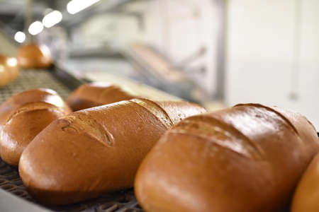 industrial production of bakery products on an assembly line - technology and machinery in the food factory Stock fotó